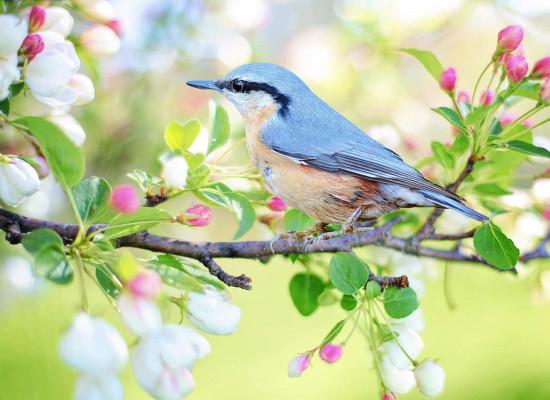 zdjęcie do artykułu: Oznaki wiosny.