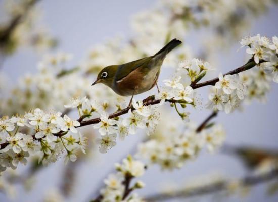 zdjęcie do artykułu: Wołanie wiosny