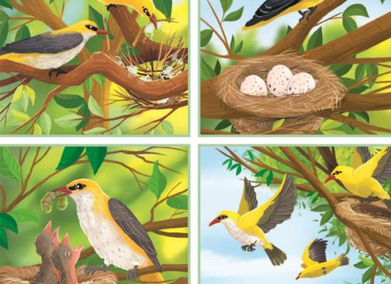 zdjęcie do artykułu: Zadania o ptakach
