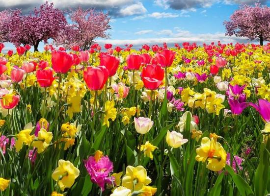 zdjęcie do artykułu: Kolory wiosny.